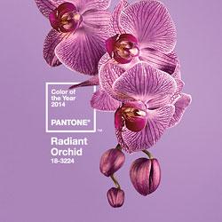 panton_radiant_orchid
